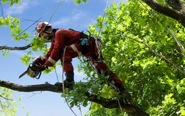 find trusted rated Stratford tree surgeons