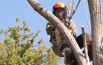 finding qualified Stratford tree surgeons