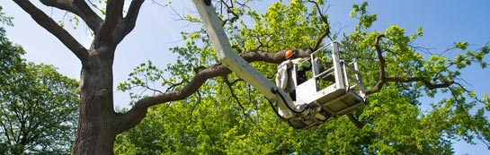Stratford tree surgery services
