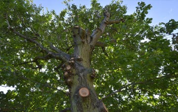 what is Stratford tree surgery?