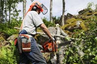 Stratford tree removal services